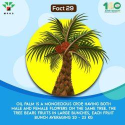 Fact 29