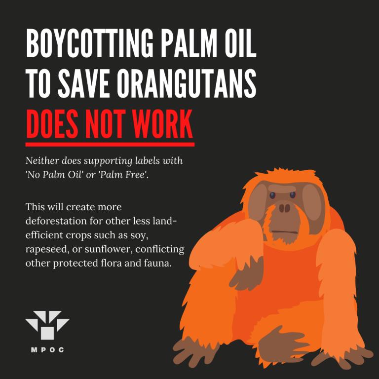 potv palm facts (2)