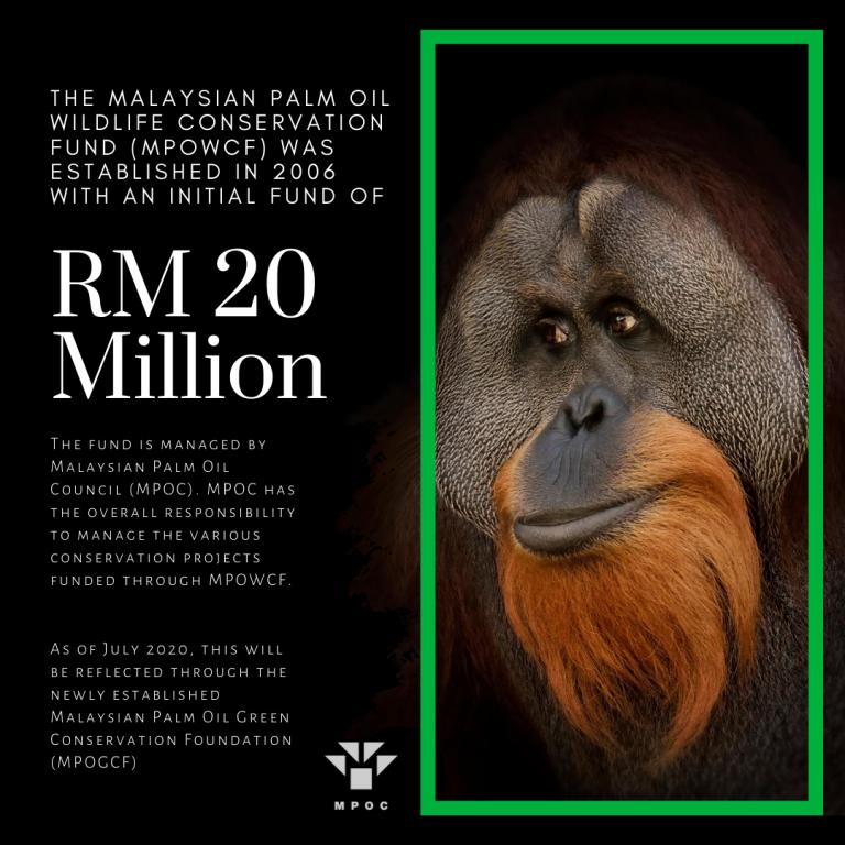 potv palm facts (3)