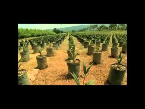 Palm Oil A Potential Savior